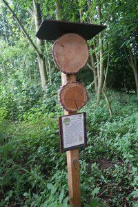 Jahresringe und Holzarten